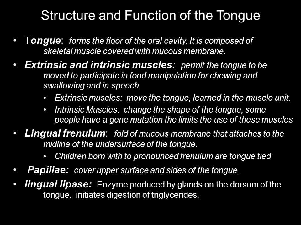 Structure and Function of the Tongue Muscles of tongue are attached to hyoid, mandible, hard palate and styloid process Papillae: elevations that create a rough surface for manipulating food and providing sensations Filiform : temperature, touch, and pressure sensations Fungiform: taste buds Foliate: taste buds Circumvallate: taste buds