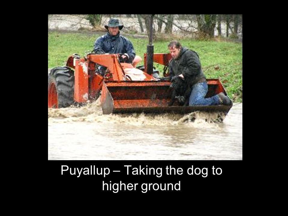 Puyallup – Taking the dog to higher ground