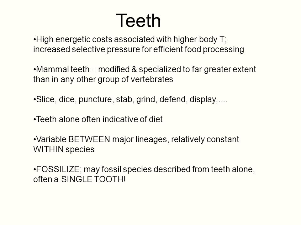 Teeth High energetic costs associated with higher body T; increased selective pressure for efficient food processing Mammal teeth---modified & special
