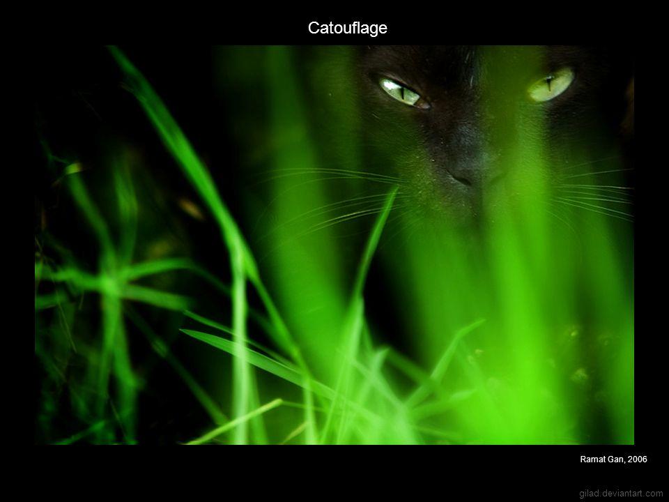 gilad.deviantart.com Catouflage Ramat Gan, 2006