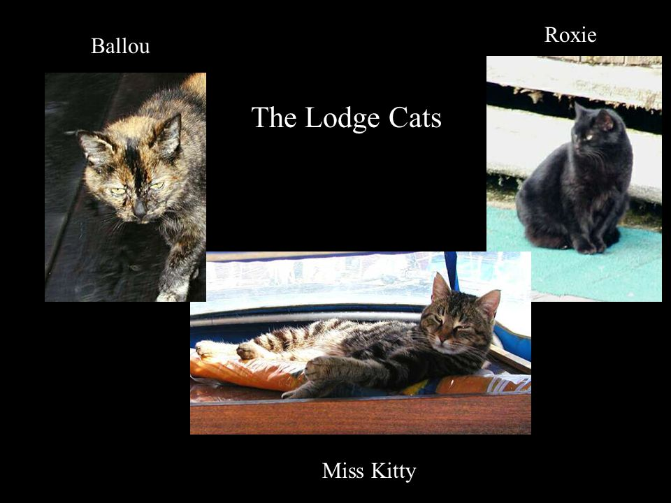 The Lodge Cats Ballou Miss Kitty Roxie