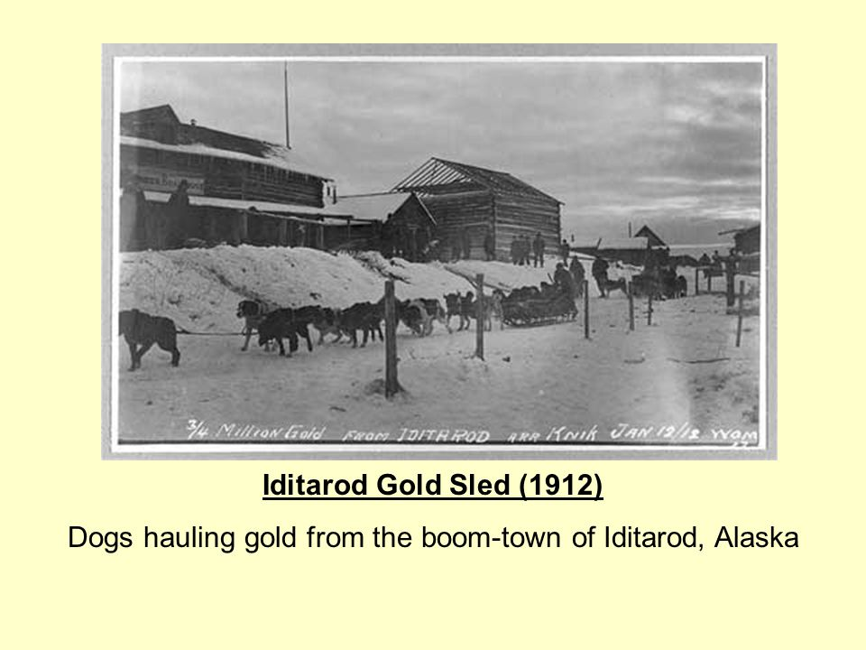 Iditarod Gold Sled (1912) Dogs hauling gold from the boom-town of Iditarod, Alaska