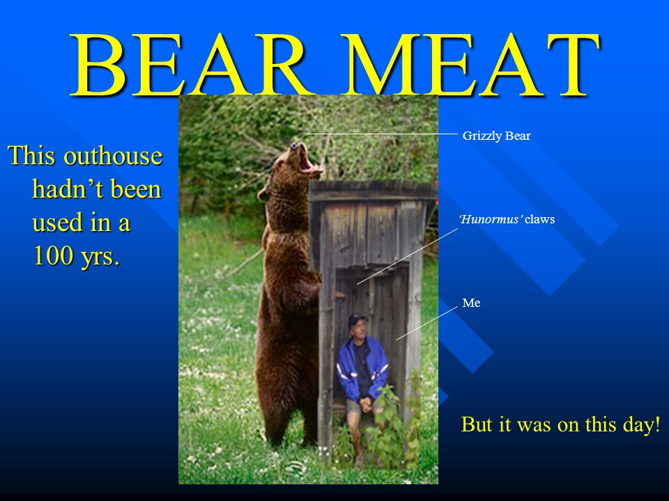 BEAR MEAT This outhouse hadnt been used in a 100 yrs.