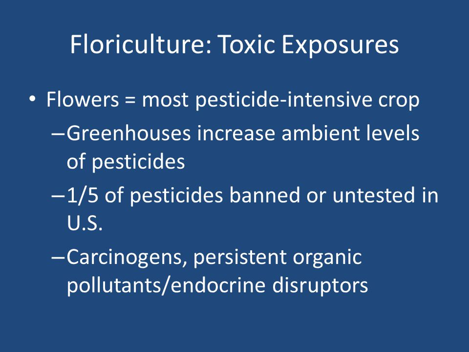 Floriculture: Toxic Exposures Flowers = most pesticide-intensive crop – Greenhouses increase ambient levels of pesticides – 1/5 of pesticides banned or untested in U.S.