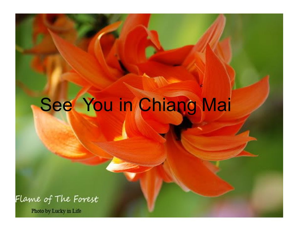 See You in Chiang Mai