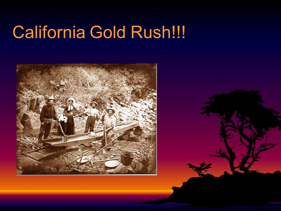 California Gold Rush!!!