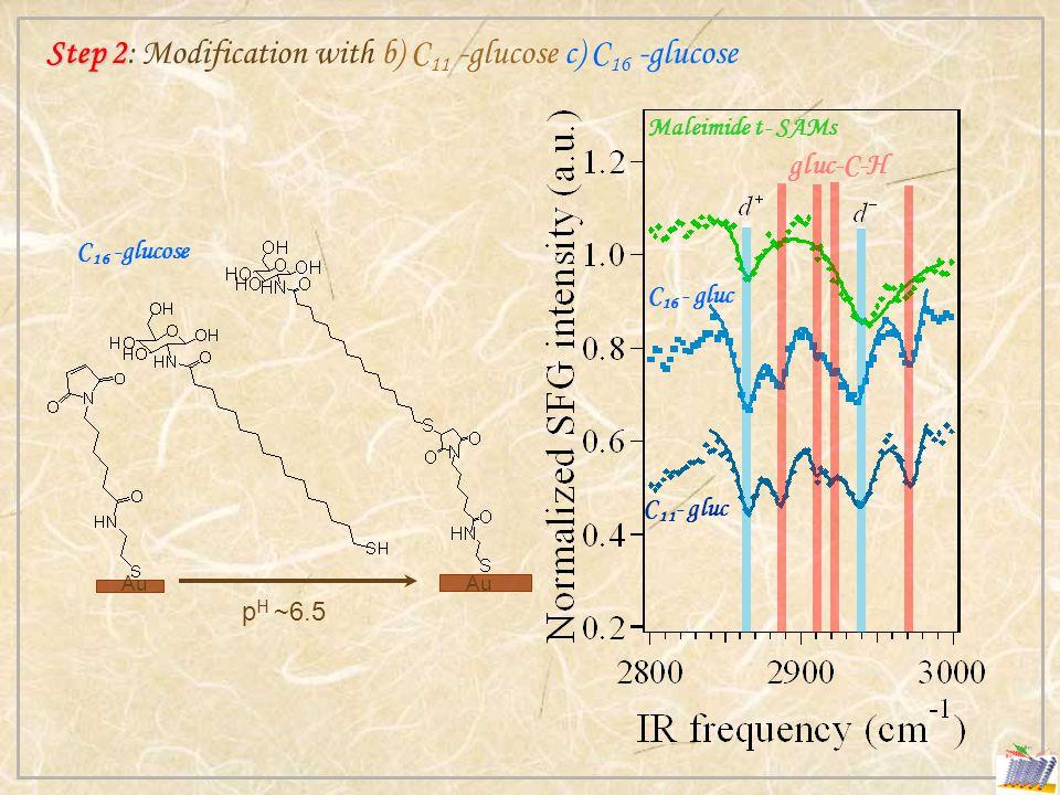 Step 2 Step 2: Modification with b) C 11 -glucose c) C 16 -glucose p H ~6.5 Au C 16 -glucose gluc-C-H Maleimide t- SAMs C 11 - gluc C 16 - gluc