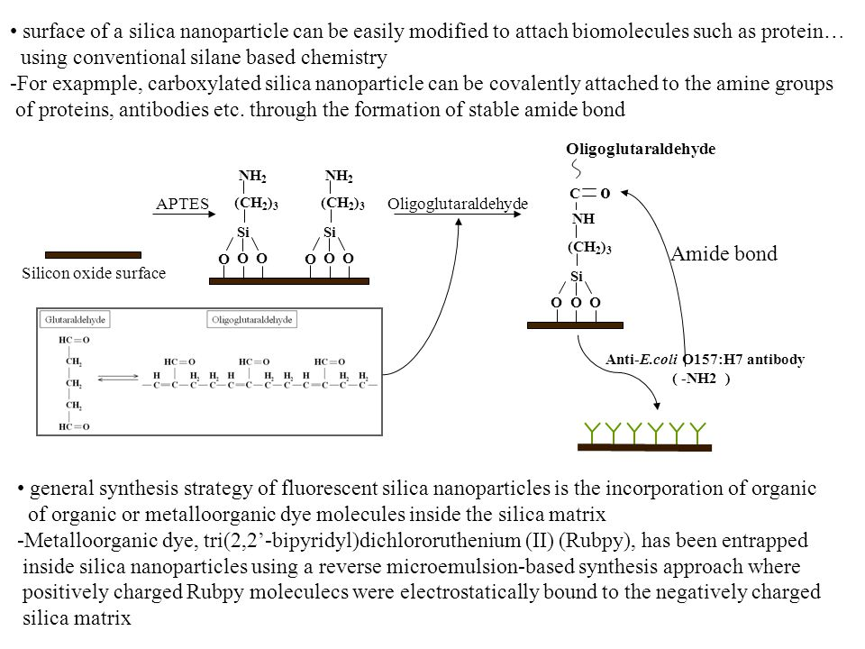 surface of a silica nanoparticle can be easily modified to attach biomolecules such as protein… using conventional silane based chemistry -For exapmpl