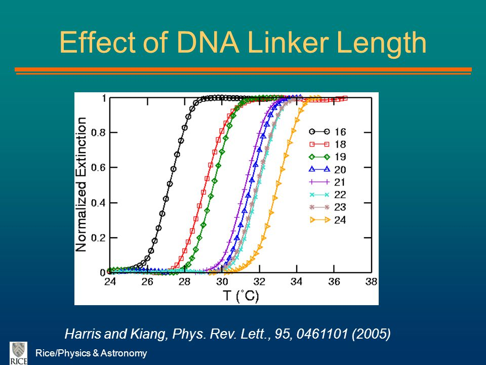 Rice/Physics & Astronomy Effect of DNA Linker Length Harris and Kiang, Phys. Rev. Lett., 95, 0461101 (2005)