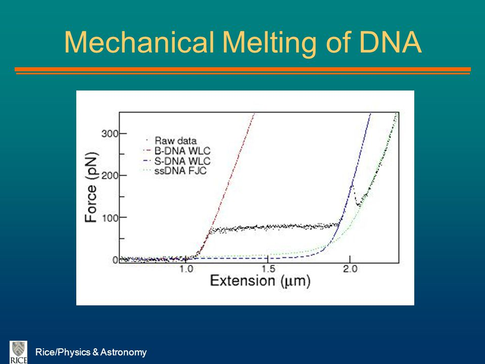 Rice/Physics & Astronomy Mechanical Melting of DNA