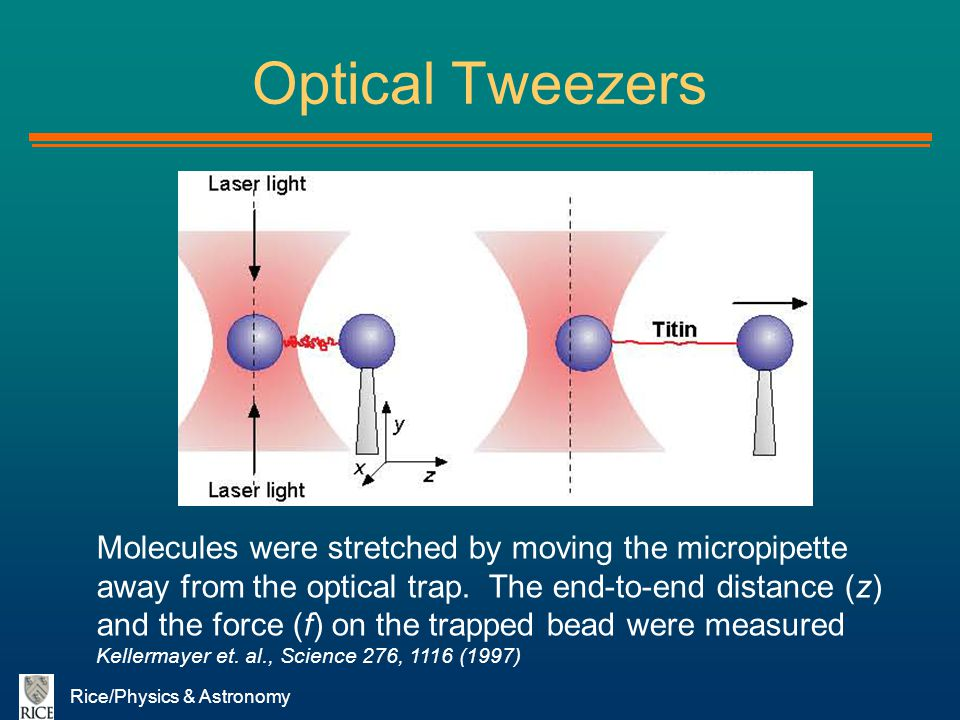 Rice/Physics & Astronomy Optical Tweezers Molecules were stretched by moving the micropipette away from the optical trap. The end-to-end distance (z)