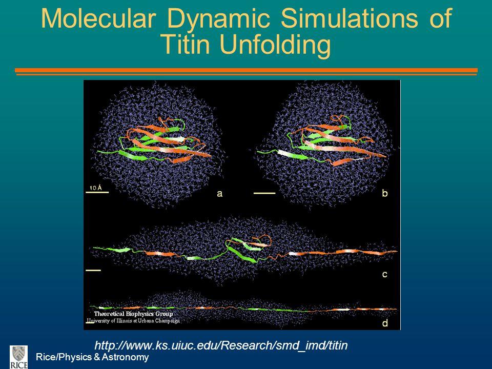Rice/Physics & Astronomy Molecular Dynamic Simulations of Titin Unfolding http://www.ks.uiuc.edu/Research/smd_imd/titin