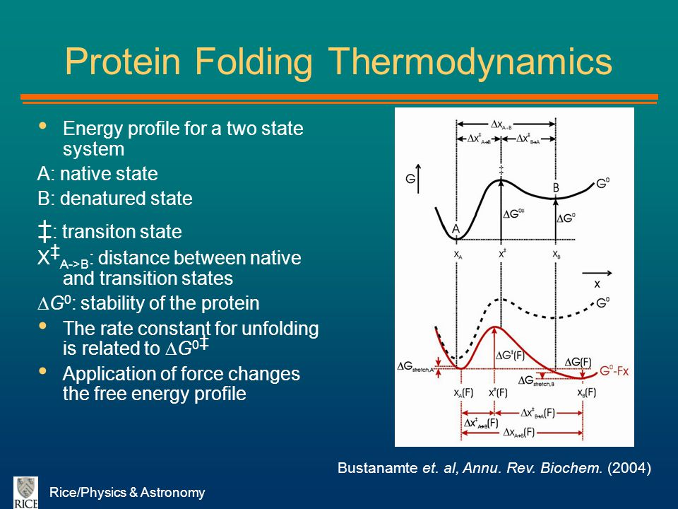 Rice/Physics & Astronomy Protein Folding Thermodynamics Energy profile for a two state system A: native state B: denatured state : transiton state X A