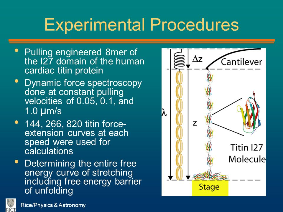 Rice/Physics & Astronomy Experimental Procedures Pulling engineered 8mer of the I27 domain of the human cardiac titin protein Dynamic force spectrosco