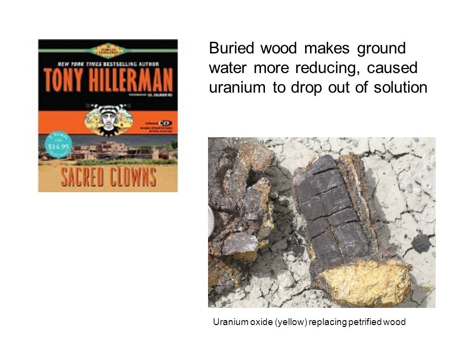 Uranium oxide (yellow) replacing petrified wood Buried wood makes ground water more reducing, caused uranium to drop out of solution