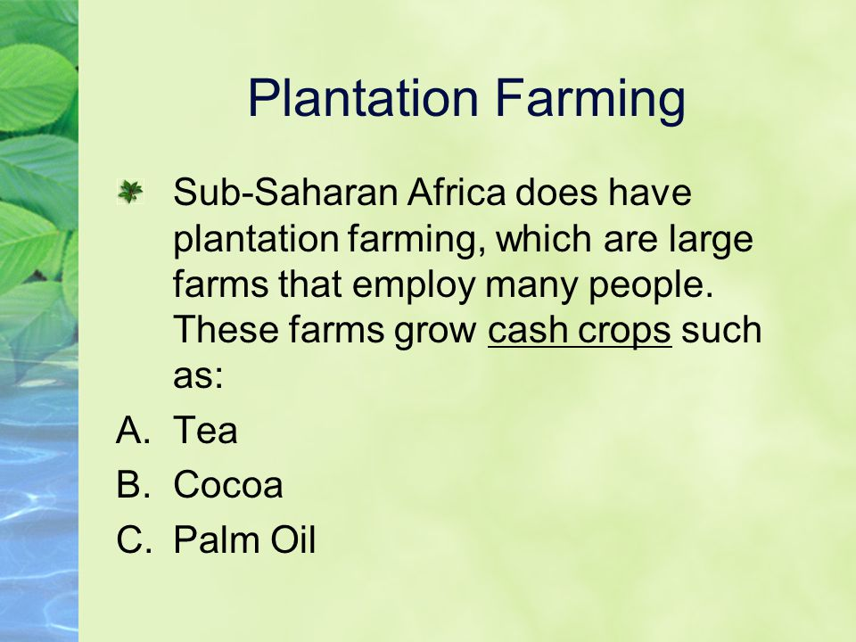 Plantation Farming Sub-Saharan Africa does have plantation farming, which are large farms that employ many people. These farms grow cash crops such as