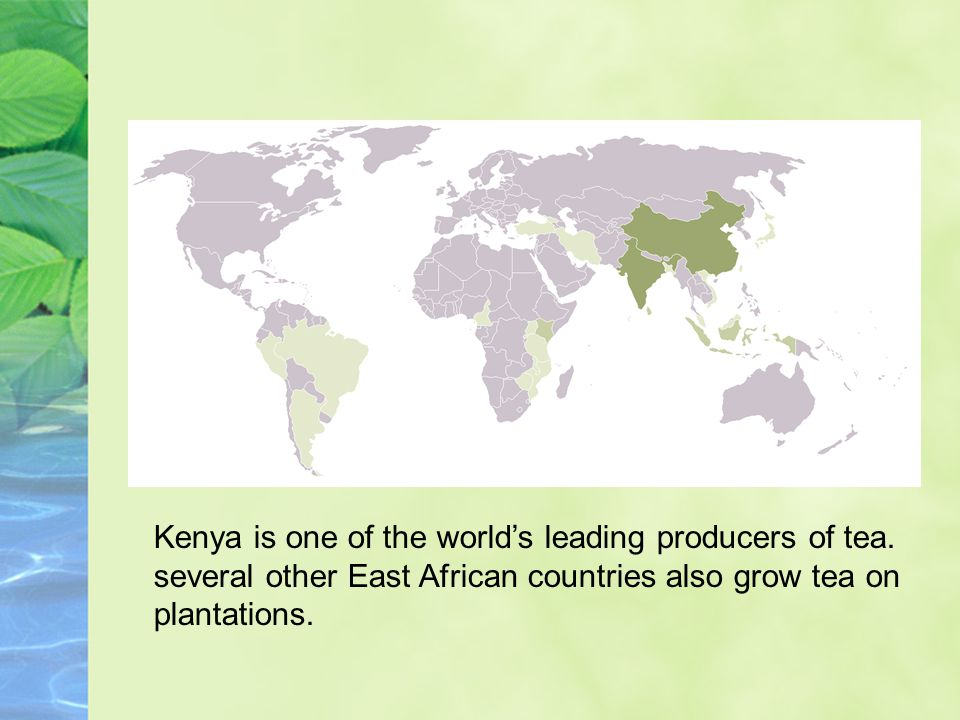 Kenya is one of the worlds leading producers of tea. several other East African countries also grow tea on plantations.