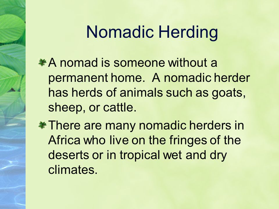 Nomadic Herding A nomad is someone without a permanent home. A nomadic herder has herds of animals such as goats, sheep, or cattle. There are many nom