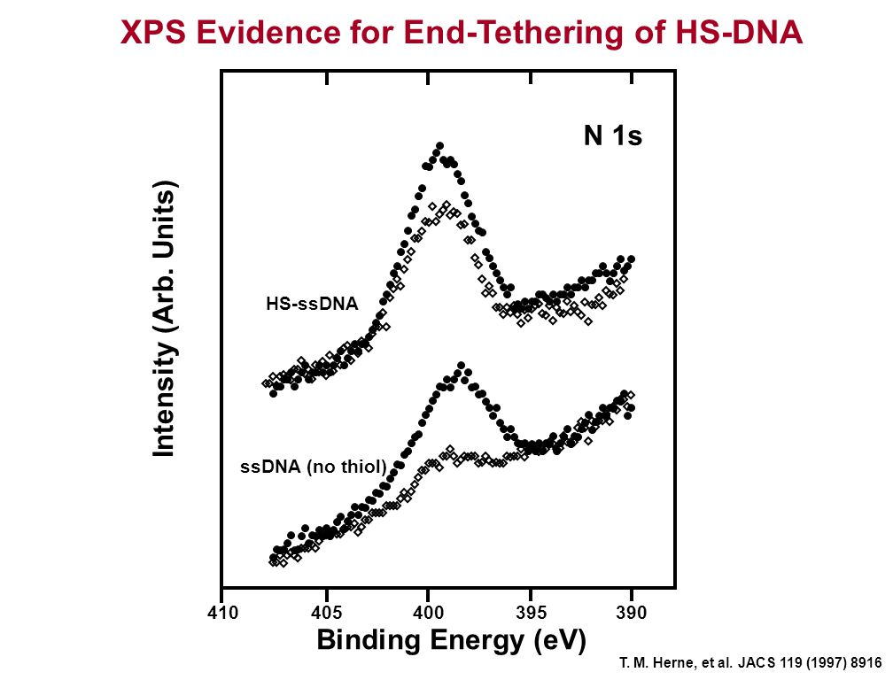 Binding Energy (eV) Intensity (Arb. Units) XPS Evidence for End-Tethering of HS-DNA T. M. Herne, et al. JACS 119 (1997) 8916 410405400395390 N 1s HS-s