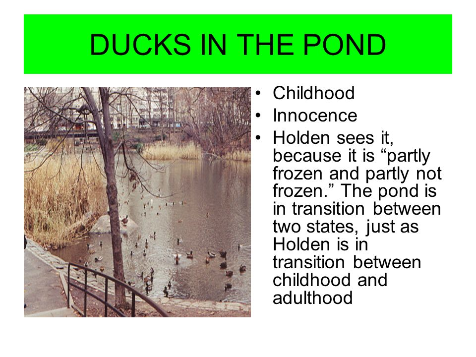DUCKS IN THE POND Childhood Innocence Holden sees it, because it is partly frozen and partly not frozen. The pond is in transition between two states,