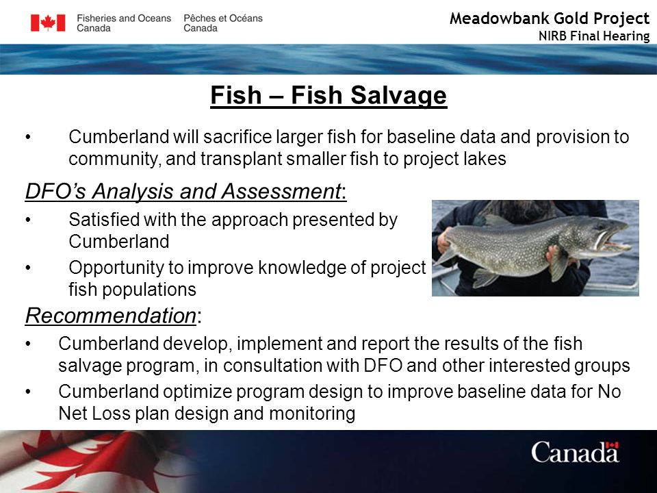 Fish – Fish Salvage Meadowbank Gold Project NIRB Final Hearing Cumberland will sacrifice larger fish for baseline data and provision to community, and transplant smaller fish to project lakes DFOs Analysis and Assessment: Satisfied with the approach presented by Cumberland Opportunity to improve knowledge of project fish populations Recommendation: Cumberland develop, implement and report the results of the fish salvage program, in consultation with DFO and other interested groups Cumberland optimize program design to improve baseline data for No Net Loss plan design and monitoring