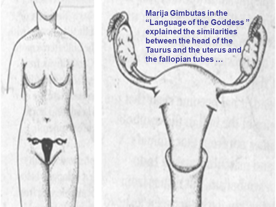 Marija Gimbutas in the Language of the Goddess explained the similarities between the head of the Taurus and the uterus and the fallopian tubes …