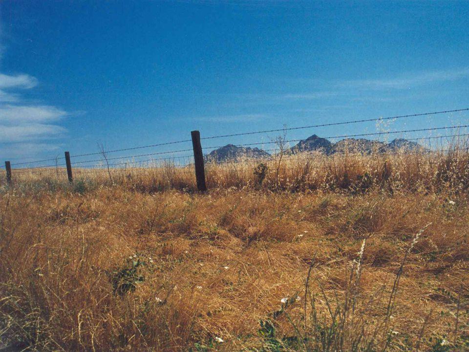 THE WILD WEST BY JAMIE HALBERT