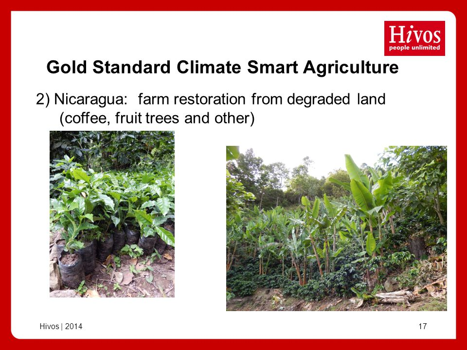 Hivos | Gold Standard Climate Smart Agriculture 2) Nicaragua: farm restoration from degraded land (coffee, fruit trees and other)