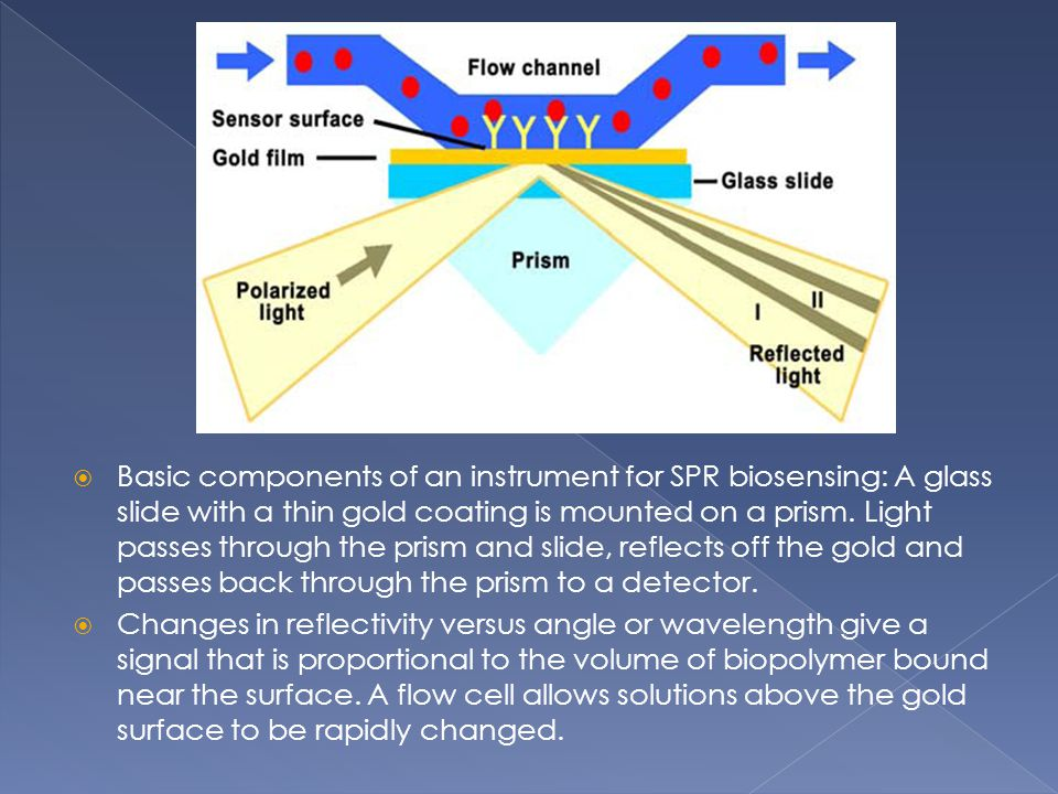 Basic components of an instrument for SPR biosensing: A glass slide with a thin gold coating is mounted on a prism. Light passes through the prism and