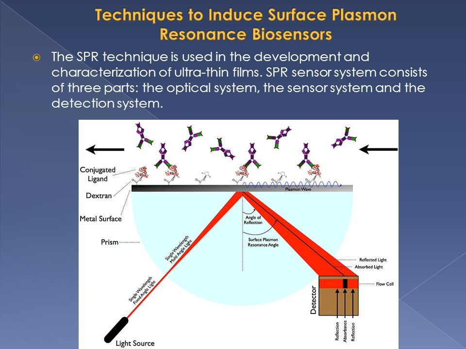 SPR: A powerful tool for real-time, label-free analysis of biomolecular interactions The study and characterization of molecular interactions is essential to explore biomolecular structure-function relationships, and it aids our understanding of biological systems in life sciences.