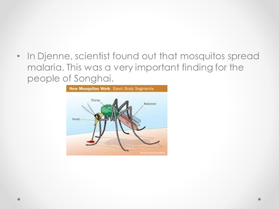 In Djenne, scientist found out that mosquitos spread malaria. This was a very important finding for the people of Songhai.