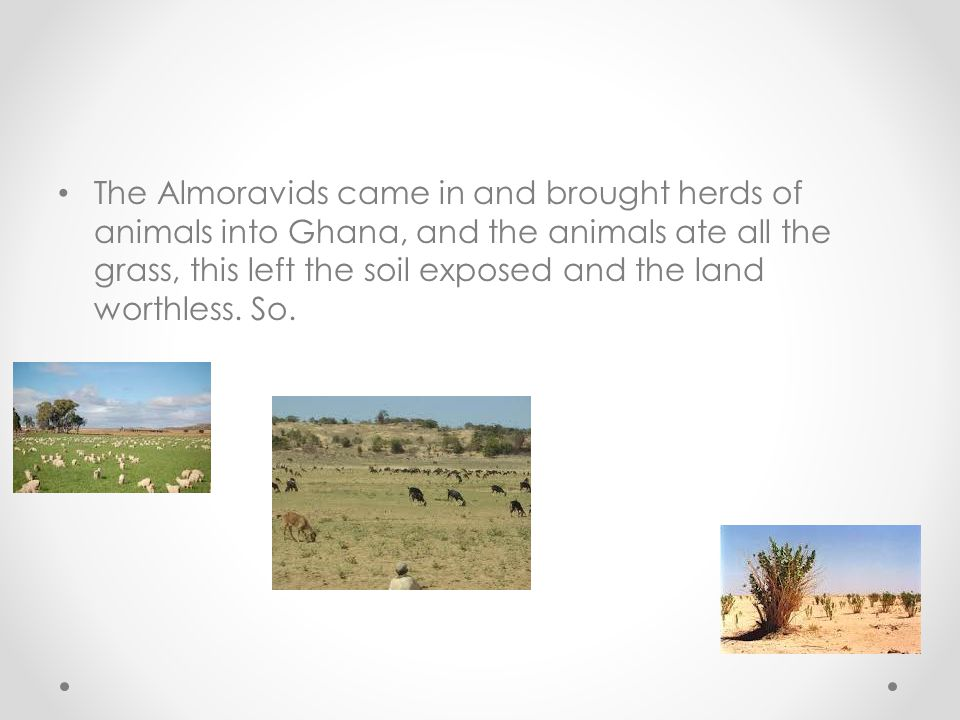 The Almoravids came in and brought herds of animals into Ghana, and the animals ate all the grass, this left the soil exposed and the land worthless.