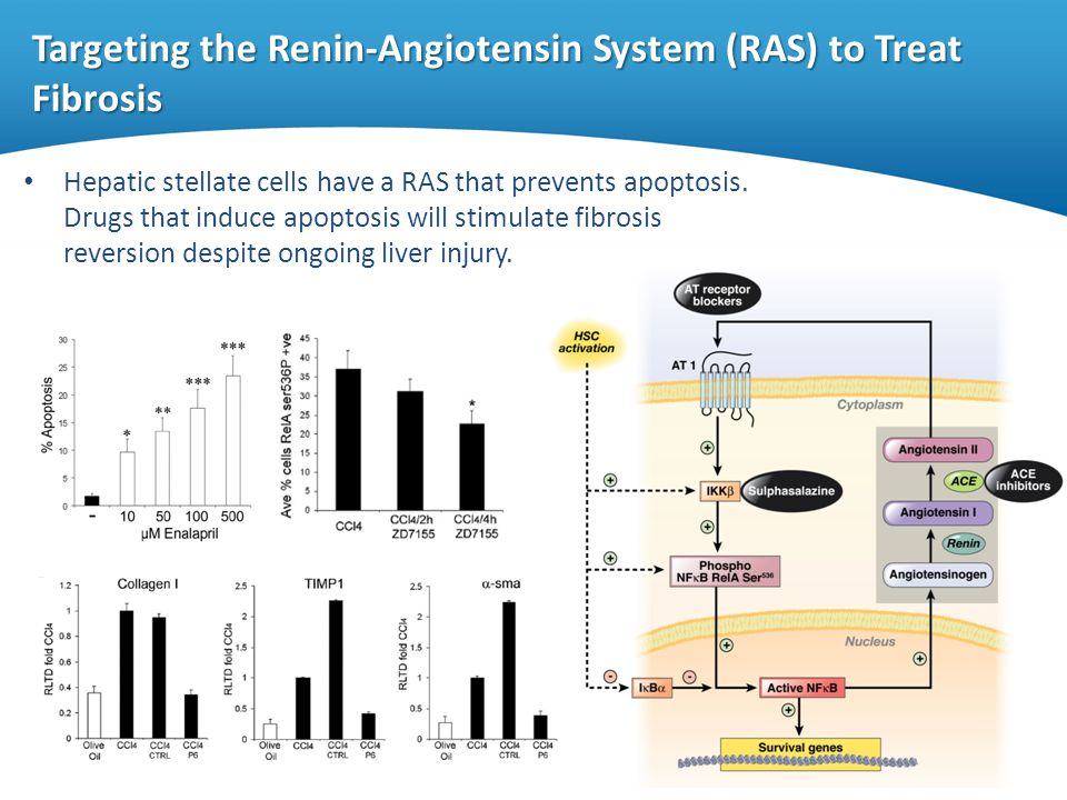 Targeting the Renin-Angiotensin System (RAS) to Treat Fibrosis Hepatic stellate cells have a RAS that prevents apoptosis. Drugs that induce apoptosis