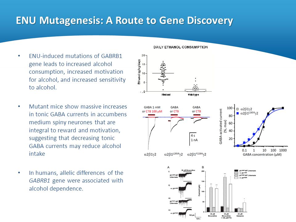 ENU Mutagenesis: A Route to Gene Discovery ENU-induced mutations of GABRB1 gene leads to increased alcohol consumption, increased motivation for alcoh