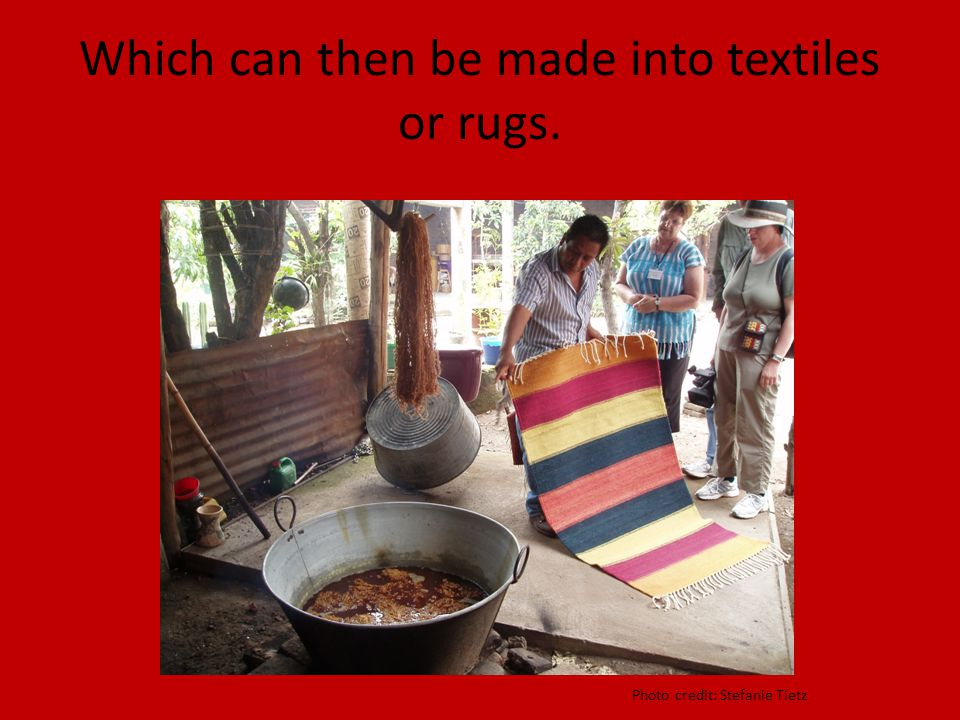 Which can then be made into textiles or rugs. Photo credit: Stefanie Tietz