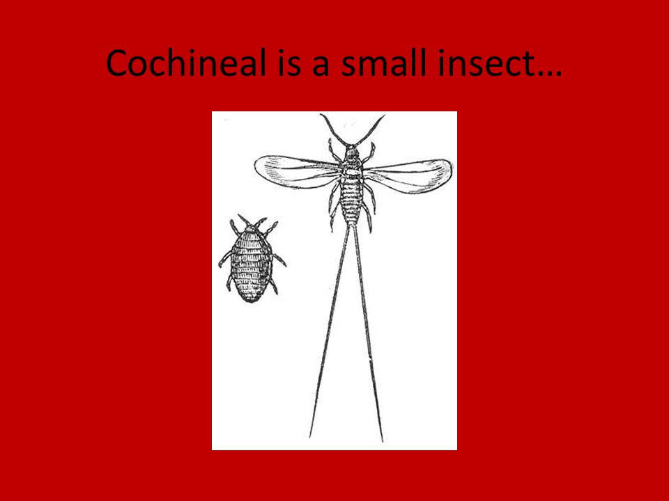 Cochineal is a small insect…