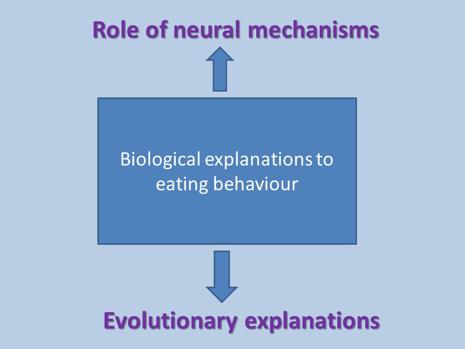 Role of neural mechanisms in eating behaviour Eating behaviour = ingestive behaviour Homeostasis – if we are hot – we sweat – if we are dehydrated – thirsts – If we need food – hunger Homeostasis is maintained via a negative feedback loop: this assumes that all body variables have a set point (or range) The digestive tract and the hypothalamus play a significant role in eating behaviour.