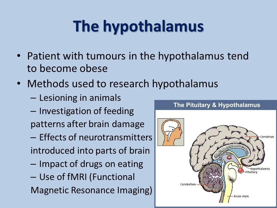Dual-Centre Theory of feeding behaviour 2 areas of the hypothalamus involved in eating behaviour – Ventro Medial Hypothalamus (VMH) as a satiety center – Lateral Hypothalamus (LH) as a Hunger center .