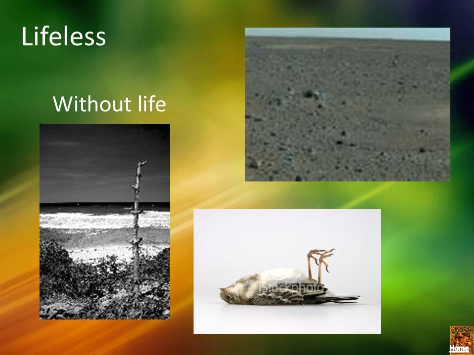 Lifeless Without life