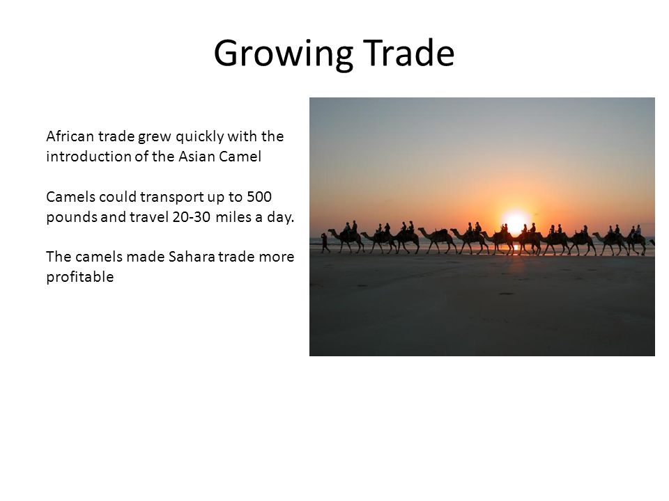 Growing Trade African trade grew quickly with the introduction of the Asian Camel Camels could transport up to 500 pounds and travel 20-30 miles a day.