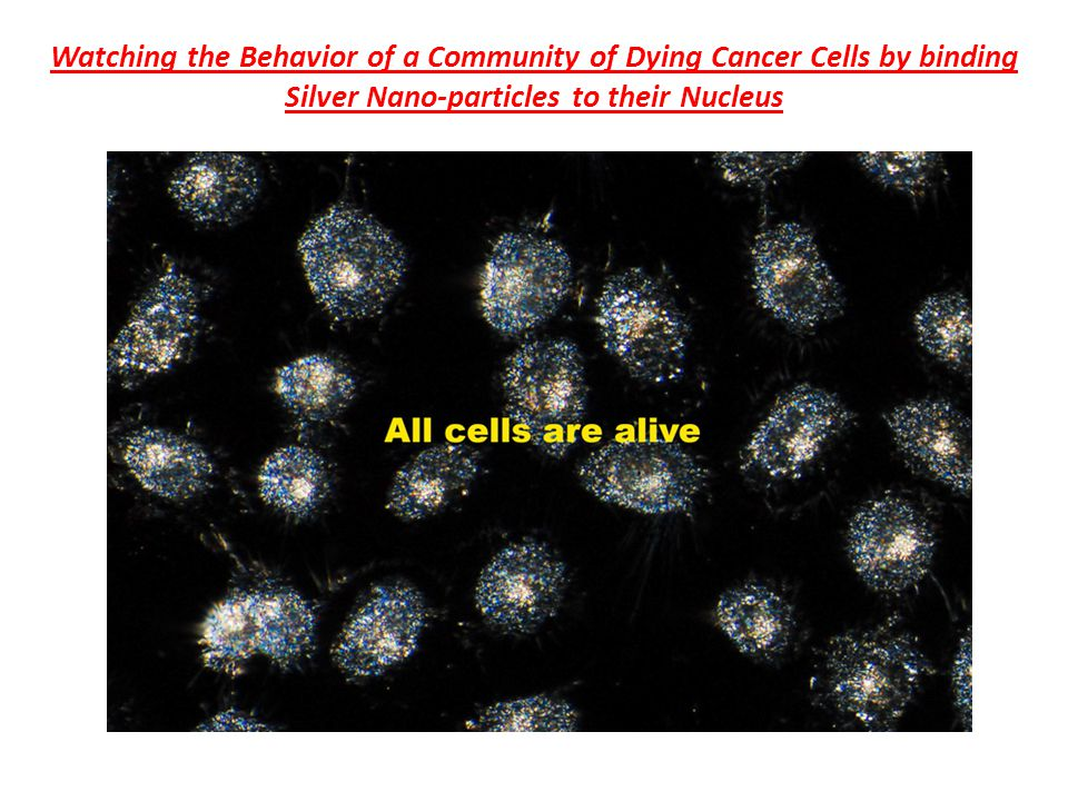 Watching the Behavior of a Community of Dying Cancer Cells by binding Silver Nano-particles to their Nucleus