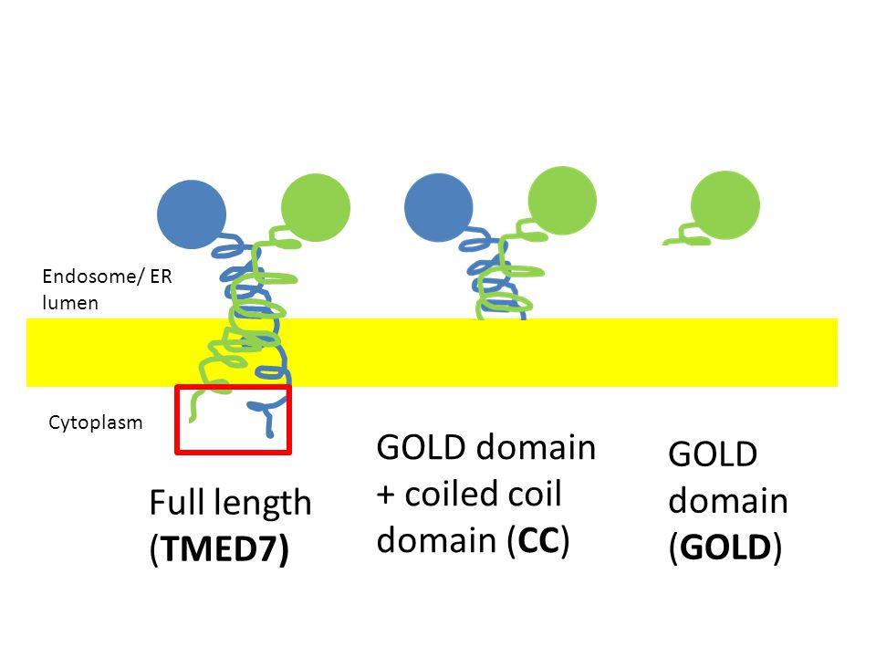Endosome/ ER lumen Cytoplasm Full length (TMED7) GOLD domain + coiled coil domain (CC) GOLD domain (GOLD)