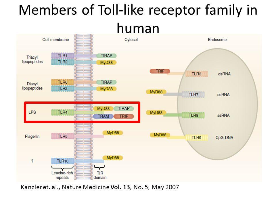 Birth of proteins Nucleus DNA RNA Protein Golgi apparatus Rough Endoplasmic Reticulum Mature proteins
