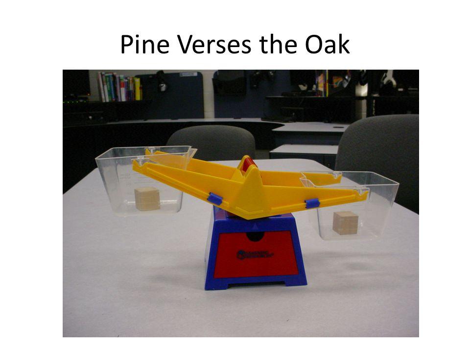 Pine Verses the Oak