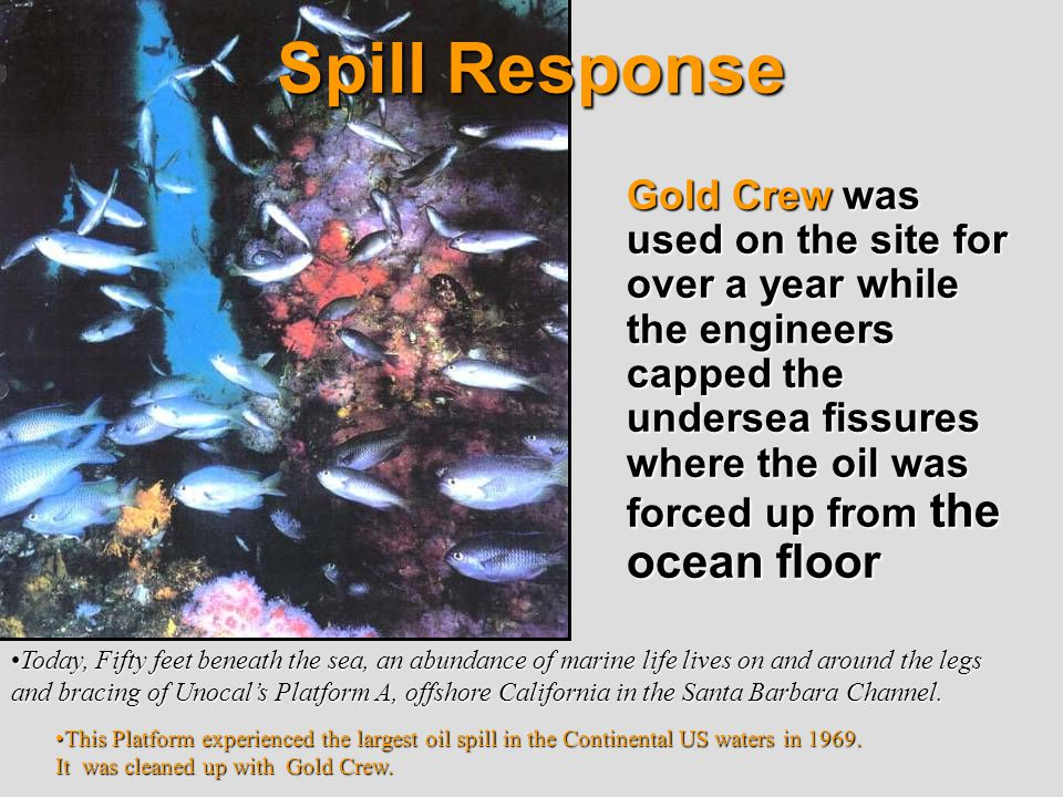 Gold Crew was used on the site for over a year while the engineers capped the undersea fissures where the oil was forced up from the ocean floor This Platform experienced the largest oil spill in the Continental US waters in 1969.