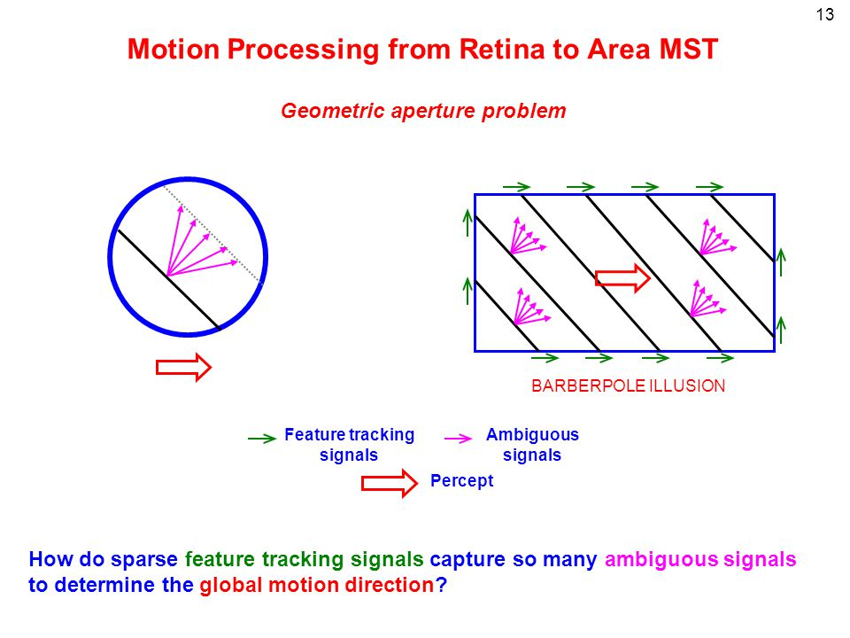 13 Motion Processing from Retina to Area MST Geometric aperture problem BARBERPOLE ILLUSION Feature tracking signals Percept Ambiguous signals How do
