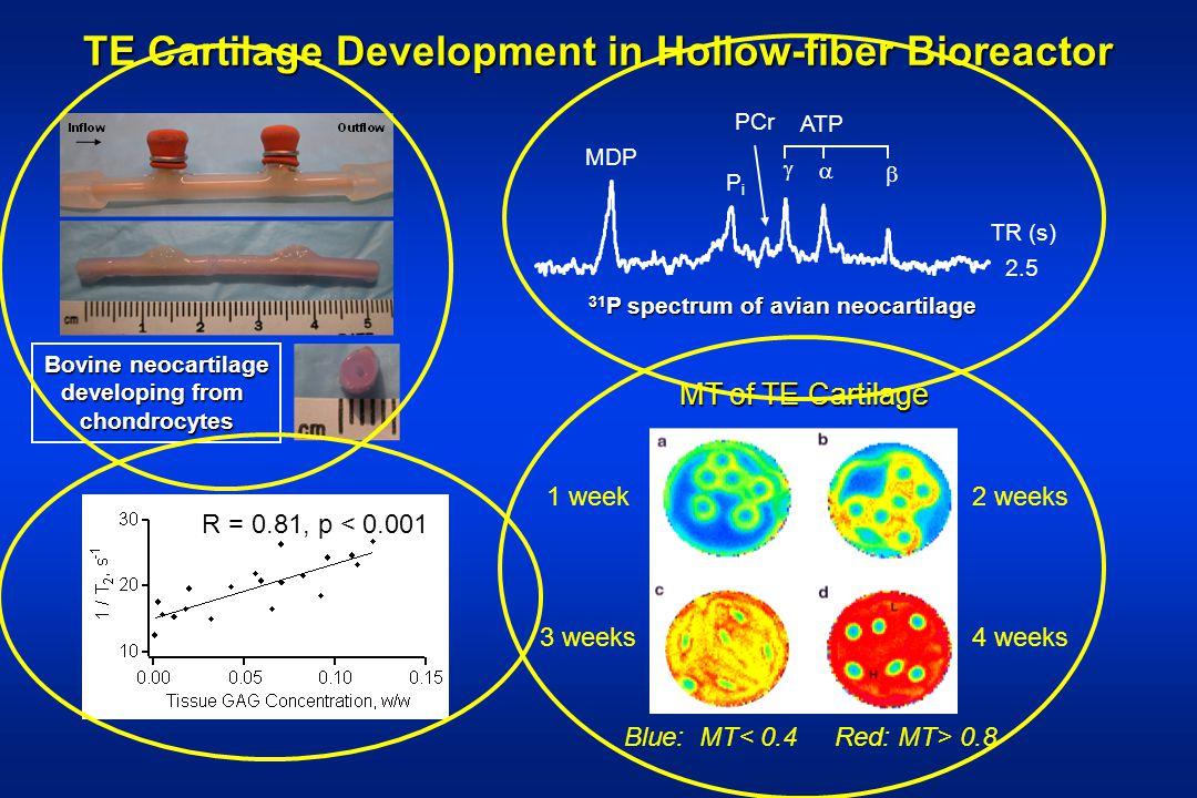 TE Cartilage Development in Hollow-fiber Bioreactor Bovine neocartilage developing from chondrocytes ATP PCr MDP TR (s) 2.5 PiPi 31 P spectrum of avia