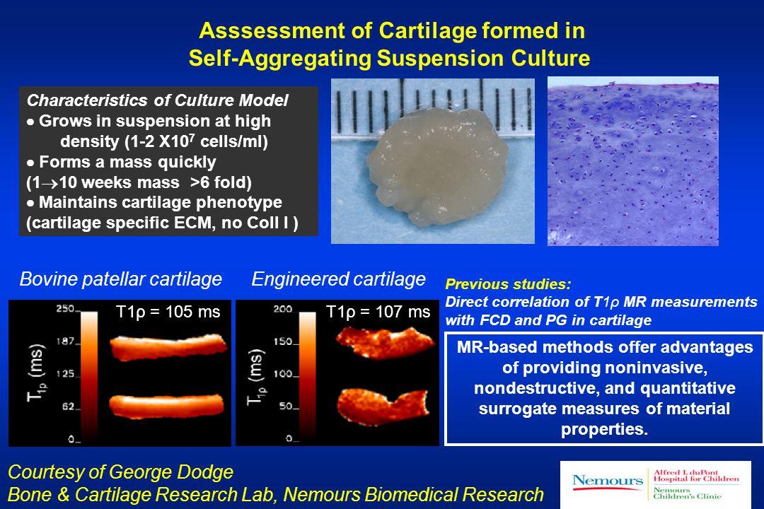 Asssessment of Cartilage formed in Self-Aggregating Suspension Culture MR-based methods offer advantages of providing noninvasive, nondestructive, and