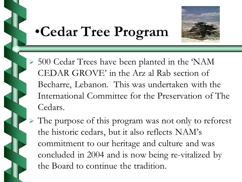 Cedar Tree Program 500 Cedar Trees have been planted in the NAM CEDAR GROVE in the Arz al Rab section of Becharre, Lebanon.