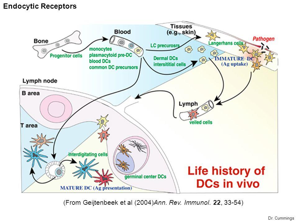 Endocytic Receptors (From Geijtenbeek et al (2004)Ann. Rev. Immunol. 22, 33-54) Dr. Cummings